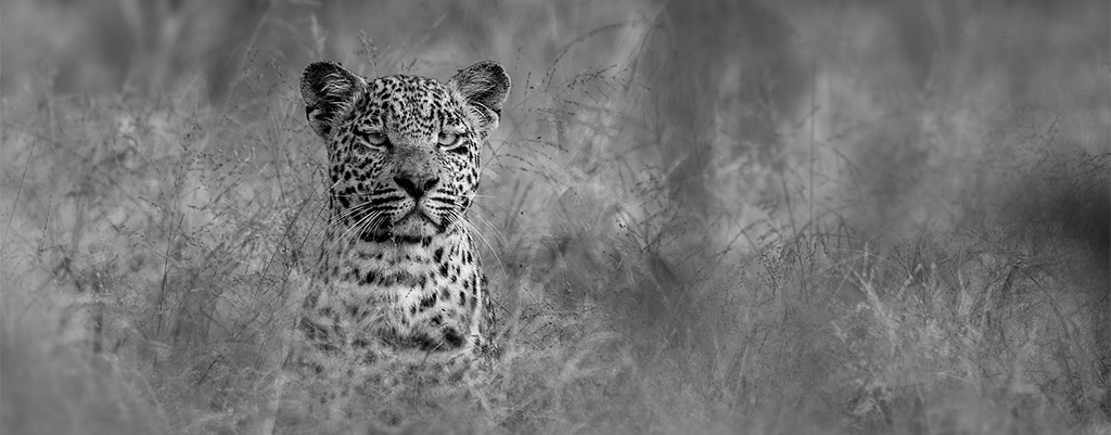 Kruger Wildlife Photography Workshop, SA